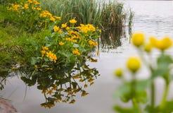 Ανθίζοντας λουλούδι σφαιρών Στοκ Εικόνες