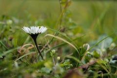 ανθίζοντας λουλούδι Στοκ Φωτογραφίες