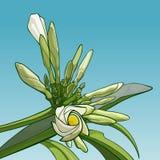 Ανθίζοντας λουλούδι frangipani ενάντια στον ουρανό διανυσματική απεικόνιση