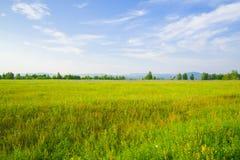 Ανθίζοντας, πράσινο λιβάδι με την πολύβλαστη χλόη Στοκ φωτογραφία με δικαίωμα ελεύθερης χρήσης