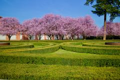 Ανθίζοντας ρόδινα δέντρα σε ένα πάρκο στοκ φωτογραφία
