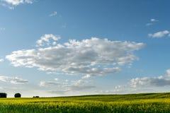 Ανθίζοντας τομέας και μπλε ουρανός συναπόσπορων με τα σύννεφα κατά τη διάρκεια του ηλιοβασιλέματος, άνοιξη τοπίων Στοκ Εικόνες