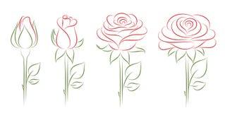 ανθίζοντας τριαντάφυλλα απεικόνιση αποθεμάτων