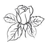 Ανθίζοντας τριαντάφυλλα Στοκ φωτογραφίες με δικαίωμα ελεύθερης χρήσης
