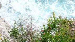 Ανθίζοντας φρούτα ροδιών στο δέντρο στο Μαυροβούνιο Pomegrana απόθεμα βίντεο
