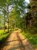 Ανθίζοντας φυσικό τοπίο Στοκ Εικόνες