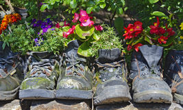 Ανθίζοντας φυτά στις παλαιές μπότες περπατήματος Στοκ φωτογραφία με δικαίωμα ελεύθερης χρήσης