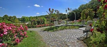 Ανθίζοντας φυτεία με τριανταφυλλιές στη δύση του Μόναχου πάρκων πόλεων στοκ φωτογραφία