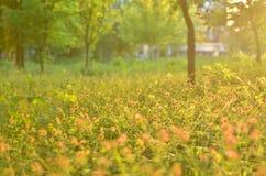 Ανθίζοντας χορτάρια, θολωμένα δέντρα, πίσω φως στοκ φωτογραφίες