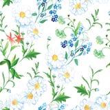 Ανθίζοντας floral άνευ ραφής διανυσματική τυπωμένη ύλη λιβαδιών Στοκ Φωτογραφίες