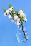 ανθίζοντας vase αμυγδάλων Στοκ Εικόνες