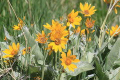 Ανθίσεις στα wildflowers άνοιξης στο λιβάδι Στοκ φωτογραφίες με δικαίωμα ελεύθερης χρήσης