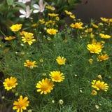 ανθίστε λίγα κίτρινα Στοκ φωτογραφία με δικαίωμα ελεύθερης χρήσης