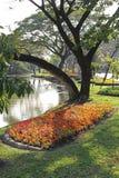 ανθίστε τον κήπο Στοκ φωτογραφίες με δικαίωμα ελεύθερης χρήσης