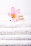 ανθίστε το λευκό πετσετών plumeria Στοκ φωτογραφία με δικαίωμα ελεύθερης χρήσης