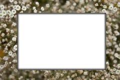 ανθίστε το λευκό πλαισί&omega Στοκ Εικόνες