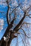 ανθίστε το χρονικό χειμώνα χιονιού Στοκ Φωτογραφίες