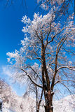 ανθίστε το χρονικό χειμώνα χιονιού Στοκ φωτογραφία με δικαίωμα ελεύθερης χρήσης