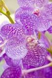ανθίστε orchid Στοκ εικόνα με δικαίωμα ελεύθερης χρήσης