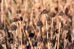 Ανθισμένα λουλούδια στοκ φωτογραφία