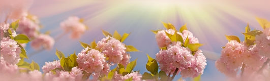 Ανθισμένος & x28 flowering& x29  όμορφος ιαπωνικός χαρωπός κλάδος στοκ εικόνες