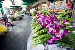 ανθισμένο dendrobium orchids ρόδινο λευ&k στοκ εικόνα με δικαίωμα ελεύθερης χρήσης