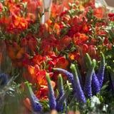 Ανθοδέσμη από τα πορτοκαλιά freesias και μπλε verbena για τους γάμους, διορισμοί στοκ εικόνες