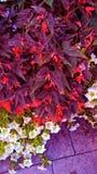 ανθοδέσμη λουλουδιών με τις πορφυρές σκιές και άλλα χρώματα στοκ εικόνες με δικαίωμα ελεύθερης χρήσης