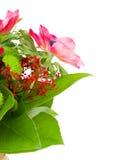 Ανθοδέσμη με τα κόκκινα λουλούδια anemone Στοκ εικόνα με δικαίωμα ελεύθερης χρήσης