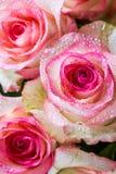 Ανθοδέσμη ομορφιάς σχεδίων κινηματογραφήσεων σε πρώτο πλάνο των ρόδινων τριαντάφυλλων στοκ εικόνα με δικαίωμα ελεύθερης χρήσης