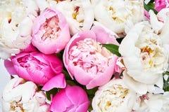 Ανθοδέσμη ρόδινου και άσπρου peony τα λουλούδια εμβλημάτων ανασκόπησης διαμορφώνουν λίγη ρόδινη σπείρα Τοπ όψη Στοκ Εικόνα