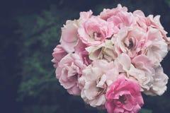 Ανθοδέσμη της λεπτής ρόδινης κινηματογράφησης σε πρώτο πλάνο τριαντάφυλλων, στον κήπο στοκ εικόνες