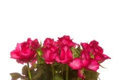 Ανθοδέσμη τριαντάφυλλων Στοκ Φωτογραφίες