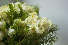 Ανθοδέσμη των άσπρων λουλουδιών Leucojum και των βελόνων Στοκ εικόνα με δικαίωμα ελεύθερης χρήσης