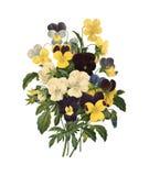 Ανθοδέσμη των βιολέτων | Παλαιές απεικονίσεις λουλουδιών Στοκ Φωτογραφίες