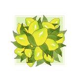 Ανθοδέσμη των κίτρινων φρούτων λεμονιών με τα πράσινα φύλλα που απομονώνονται στο άσπρο υπόβαθρο στο όμορφο ύφος Εσπεριδοειδές σχ διανυσματική απεικόνιση