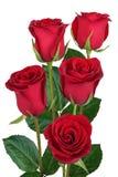 Ανθοδέσμη των κόκκινων τριαντάφυλλων που απομονώνονται Στοκ εικόνα με δικαίωμα ελεύθερης χρήσης