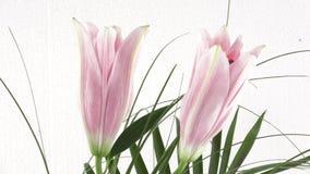 Ανθοδέσμη των λουλουδιών - κρίνοι απόθεμα βίντεο