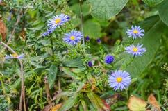 Ανθοδέσμη των μπλε λουλουδιών κήπων Στοκ φωτογραφία με δικαίωμα ελεύθερης χρήσης