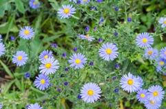 Ανθοδέσμη των μπλε λουλουδιών κήπων Στοκ Εικόνα