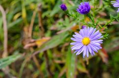 Ανθοδέσμη των μπλε λουλουδιών κήπων Στοκ εικόνες με δικαίωμα ελεύθερης χρήσης