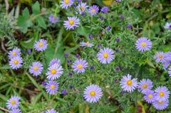 Ανθοδέσμη των μπλε λουλουδιών κήπων Στοκ εικόνα με δικαίωμα ελεύθερης χρήσης