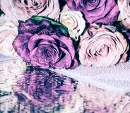 Ανθοδέσμη των πολύχρωμων τριαντάφυλλων στις πτώσεις Στοκ εικόνα με δικαίωμα ελεύθερης χρήσης