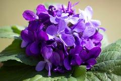 Ανθοδέσμη των πορφυρών βιολέτων λουλουδιών στοκ εικόνες με δικαίωμα ελεύθερης χρήσης