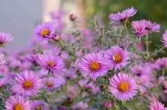 Ανθοδέσμη των ρόδινων λουλουδιών κήπων Στοκ εικόνες με δικαίωμα ελεύθερης χρήσης