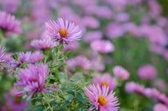 Ανθοδέσμη των ρόδινων λουλουδιών κήπων Στοκ φωτογραφίες με δικαίωμα ελεύθερης χρήσης