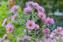Ανθοδέσμη των ρόδινων λουλουδιών κήπων Στοκ Εικόνες