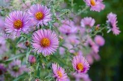 Ανθοδέσμη των ρόδινων λουλουδιών κήπων Στοκ εικόνα με δικαίωμα ελεύθερης χρήσης