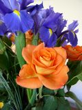 Ανθοδέσμη των τριαντάφυλλων και του πορτοκαλιού και μπλε θέματος της Iris Στοκ Εικόνες