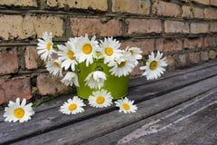 Ανθοδέσμη των chamomile λουλουδιών ενάντια σε έναν τουβλότοιχο Στοκ εικόνα με δικαίωμα ελεύθερης χρήσης